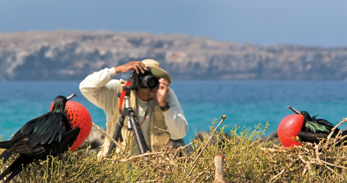 Photographer and great frigatebirds, Genovesa Island, Galapagos.