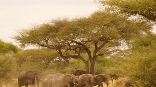 elephants in tarangine national park