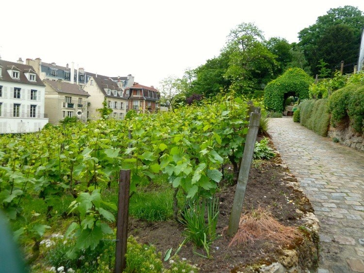 Clos Montmartre, oldest vineyard in Paris