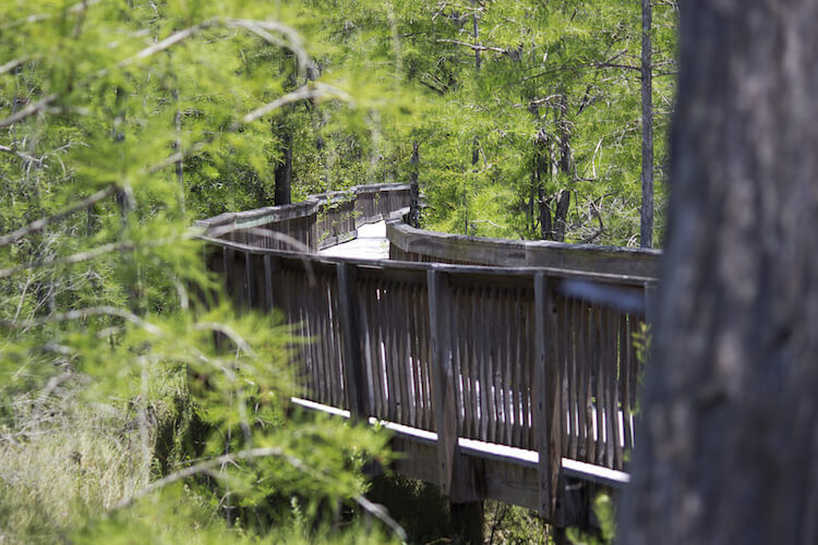 big cypress national reserve florida raised walking path