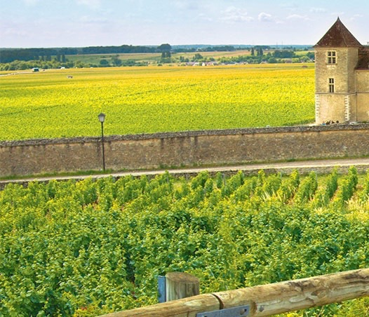 Chablis countryside. ©Backroads