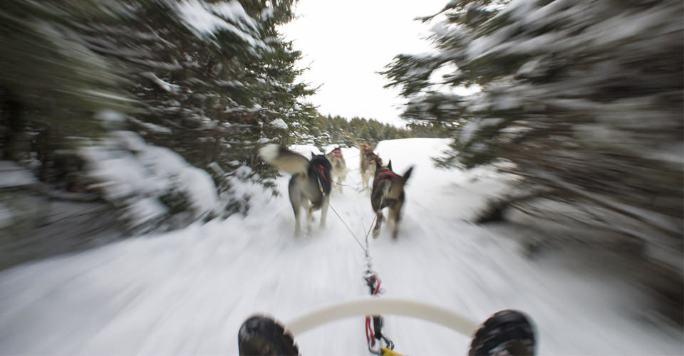 Dogsledding in the Canadian Arctic. ©Natural Habitat Adventures.