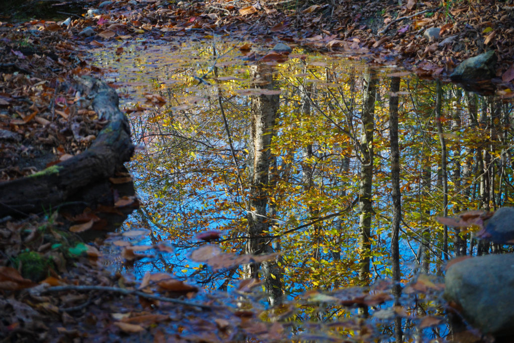 Foliage reflections, Robert Frost Interpretive Trail, Vermont by Sabine Bergmann