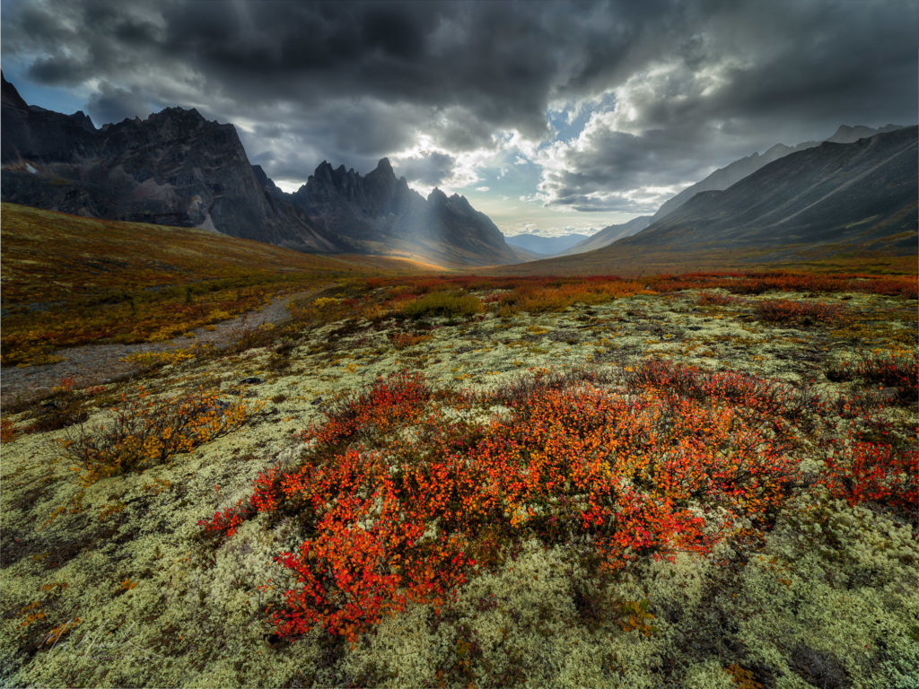 tundra in the Yukon, Canada, by Marc Muench