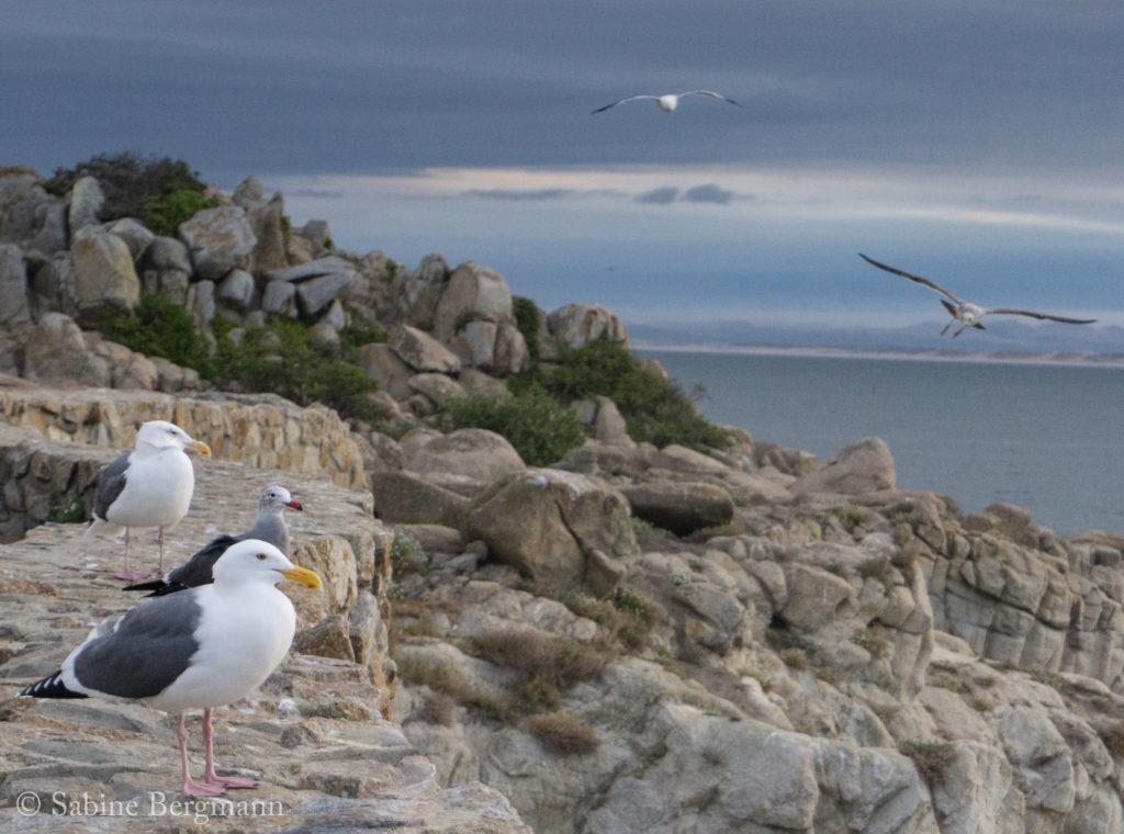 seagulls at sunrise, Big Sur, California by Sabine Bergmann