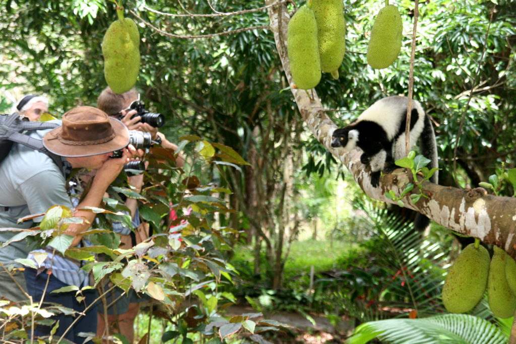 lemur photography in Madagascar by Greg Courter, Natural Habitat Adventures
